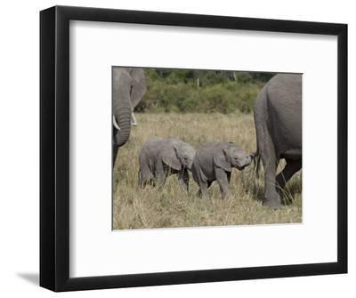 Two Young African Elephant, Masai Mara National Reserve-James Hager-Framed Photographic Print