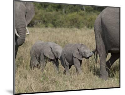 Two Young African Elephant, Masai Mara National Reserve-James Hager-Mounted Photographic Print