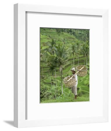 Rice Terraces Near Tegallalang Village, Bali, Indonesia, Southeast Asia, Asia-Richard Maschmeyer-Framed Photographic Print