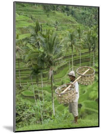 Rice Terraces Near Tegallalang Village, Bali, Indonesia, Southeast Asia, Asia-Richard Maschmeyer-Mounted Photographic Print