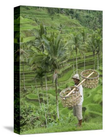 Rice Terraces Near Tegallalang Village, Bali, Indonesia, Southeast Asia, Asia-Richard Maschmeyer-Stretched Canvas Print