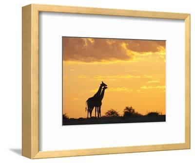 Giraffes, Silhouetted at Sunset, Etosha National Park, Namibia, Africa-Ann & Steve Toon-Framed Photographic Print