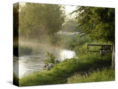 River Windrush Near Burford, Oxfordshire, the Cotswolds, England, United Kingdom, Europe-Rob Cousins-Stretched Canvas Print
