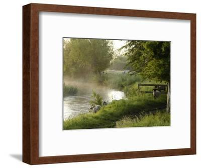 River Windrush Near Burford, Oxfordshire, the Cotswolds, England, United Kingdom, Europe-Rob Cousins-Framed Photographic Print