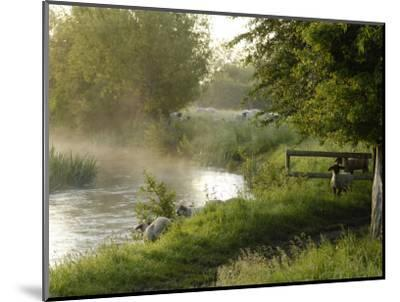 River Windrush Near Burford, Oxfordshire, the Cotswolds, England, United Kingdom, Europe-Rob Cousins-Mounted Photographic Print