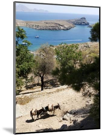 Two Donkeys in the St. Paul Bay, Lindos, Rhodes, Dodecanese, Greek Islands, Greece, Europe-Oliviero Olivieri-Mounted Photographic Print