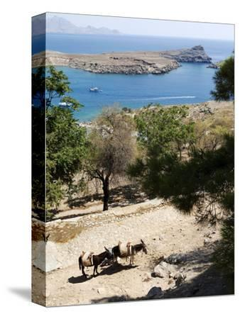 Two Donkeys in the St. Paul Bay, Lindos, Rhodes, Dodecanese, Greek Islands, Greece, Europe-Oliviero Olivieri-Stretched Canvas Print