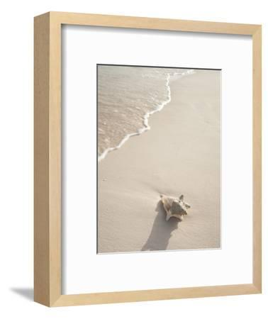 Conch Shell Washed Up on Grace Bay Beach, Providenciales, Turks and Caicos Islands, West Indies-Kim Walker-Framed Photographic Print