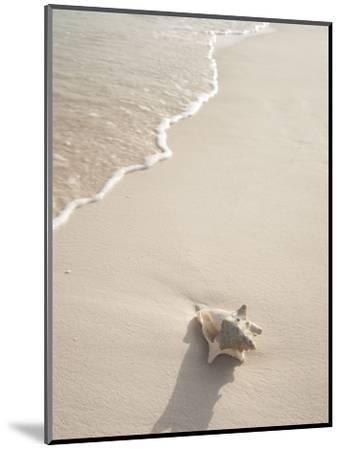 Conch Shell Washed Up on Grace Bay Beach, Providenciales, Turks and Caicos Islands, West Indies-Kim Walker-Mounted Photographic Print