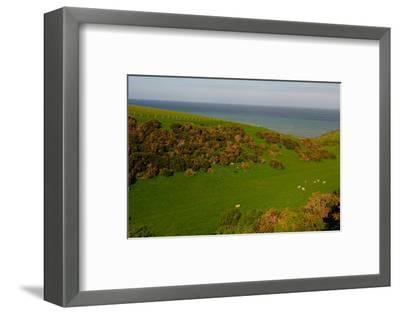 Sheep and the Rolling Hills to the Ocean, Otago, South Island, New Zealand, Pacific-Bhaskar Krishnamurthy-Framed Photographic Print