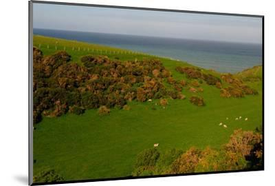 Sheep and the Rolling Hills to the Ocean, Otago, South Island, New Zealand, Pacific-Bhaskar Krishnamurthy-Mounted Photographic Print