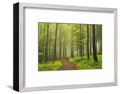 Morning Fog in Forest Near Bad Marienberg, Westerwald, Rhineland-Palatinate, Germany, Europe-Jochen Schlenker-Framed Photographic Print