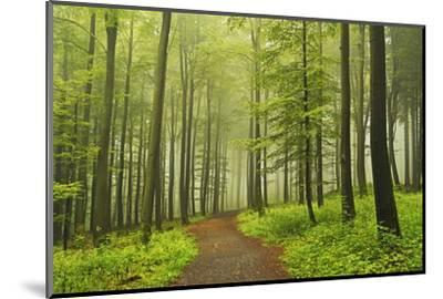 Morning Fog in Forest Near Bad Marienberg, Westerwald, Rhineland-Palatinate, Germany, Europe-Jochen Schlenker-Mounted Photographic Print