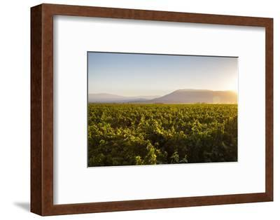 Vineyards in San Joaquin Valley, California, United States of America, North America-Yadid Levy-Framed Photographic Print