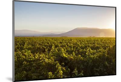Vineyards in San Joaquin Valley, California, United States of America, North America-Yadid Levy-Mounted Photographic Print