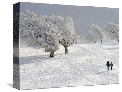 Strollers Passing Snow Covered Trees on the Mountain Schauinsland in the Black Forest , Germany--Stretched Canvas Print
