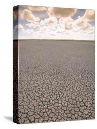 Parched Earth, Etosha National Park, Namibia-Walter Bibikow-Stretched Canvas Print