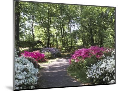 Azalea Way, Botanical Gardens, Bronx, NY-Lauree Feldman-Mounted Photographic Print