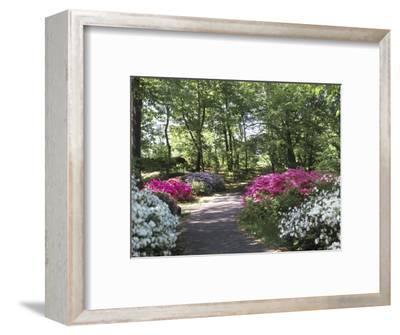Azalea Way, Botanical Gardens, Bronx, NY-Lauree Feldman-Framed Photographic Print