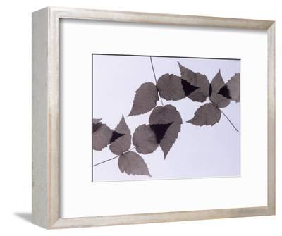 Backlit Leaves-Howard Sokol-Framed Photographic Print
