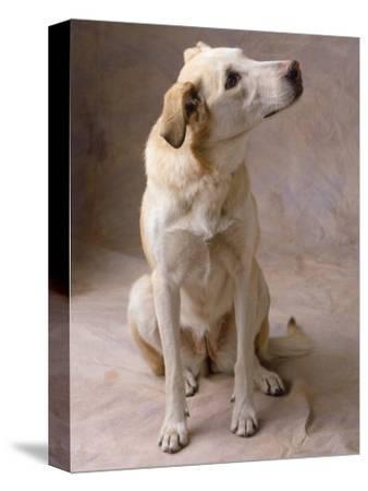Dog-Howard Sokol-Stretched Canvas Print