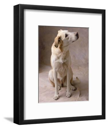 Dog-Howard Sokol-Framed Photographic Print