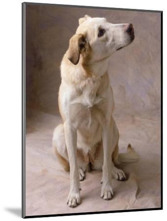 Dog-Howard Sokol-Mounted Photographic Print
