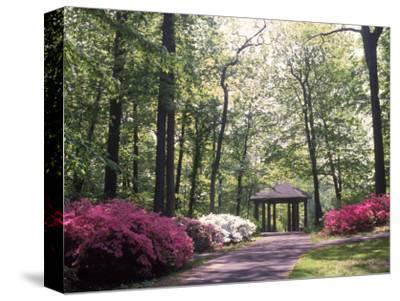 Azalea Way, Botanical Gardens, Bronx, NY-Lauree Feldman-Stretched Canvas Print