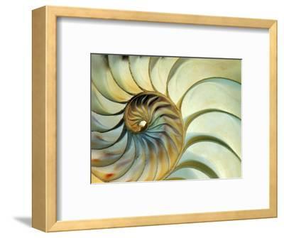 Close-up of Nautilus Shell Spirals-Ellen Kamp-Framed Premium Photographic Print