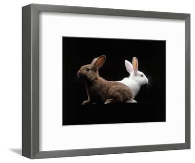 White and Brown Rabbit-Howard Sokol-Framed Photographic Print