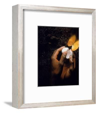 Hand with Egg Shell and Butterfly-Howard Sokol-Framed Photographic Print
