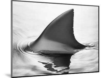 Shark Fin-Howard Sokol-Mounted Photographic Print