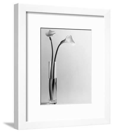 Calla Lilies in Vase-Howard Sokol-Framed Photographic Print