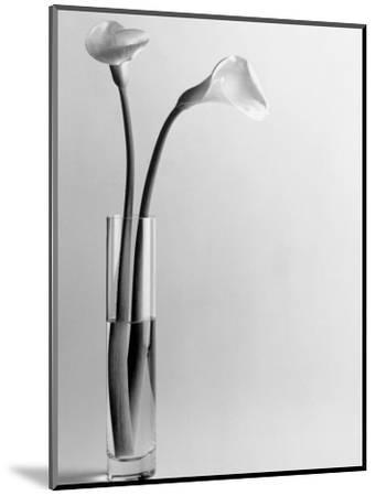Calla Lilies in Vase-Howard Sokol-Mounted Photographic Print