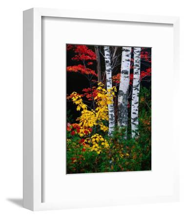 Fall Color, Old Forge Area, Adirondack Mountains, NY-Jim Schwabel-Framed Photographic Print