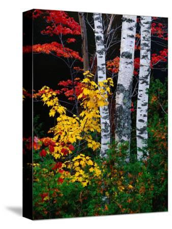 Fall Color, Old Forge Area, Adirondack Mountains, NY-Jim Schwabel-Stretched Canvas Print