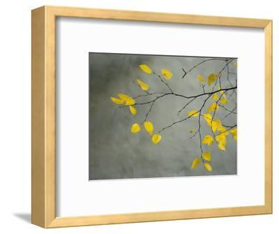 Yellow Autumnal Birch (Betula) Tree Limbs Against Gray Stucco Wall-Daniel Root-Framed Premium Photographic Print