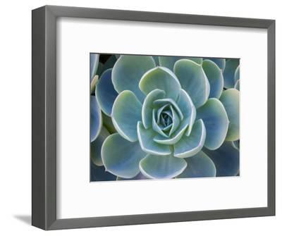 Close-Up of a Succulent Plant-Diane Miller-Framed Premium Photographic Print