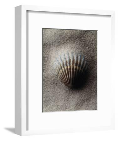 Scallop Shell in Sand-Howard Sokol-Framed Photographic Print