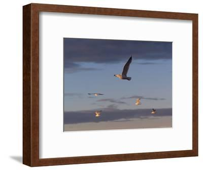 Lake Scenes, Birds at Sunset-Keith Levit-Framed Photographic Print