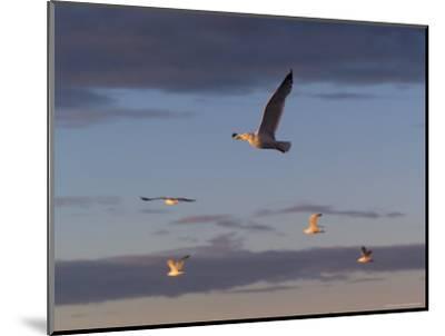 Lake Scenes, Birds at Sunset-Keith Levit-Mounted Photographic Print