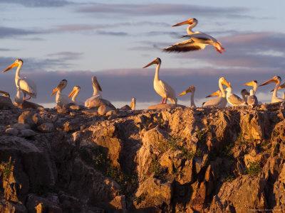 Lake Scenes, Birds at Sunset-Keith Levit-Premium Photographic Print