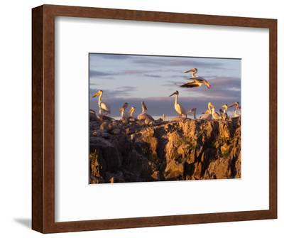 Lake Scenes, Birds at Sunset-Keith Levit-Framed Photographic Print
