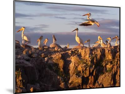 Lake Scenes, Birds at Sunset-Keith Levit-Mounted Photographic Print