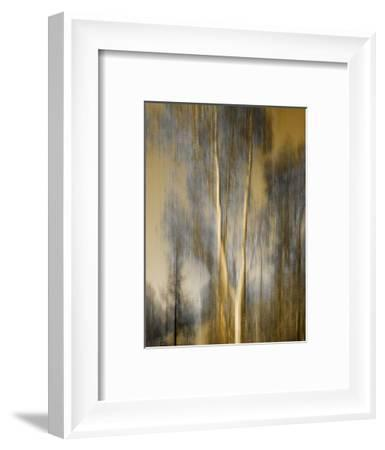 Composited Image of Trees-Diane Miller-Framed Photographic Print