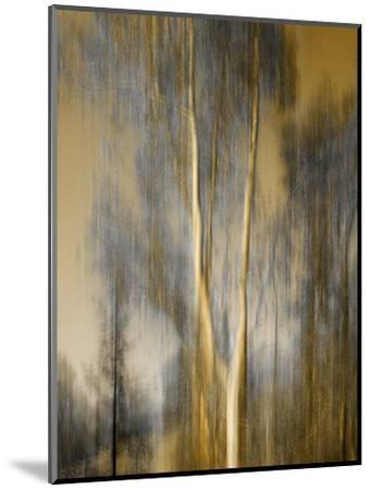 Composited Image of Trees-Diane Miller-Mounted Photographic Print