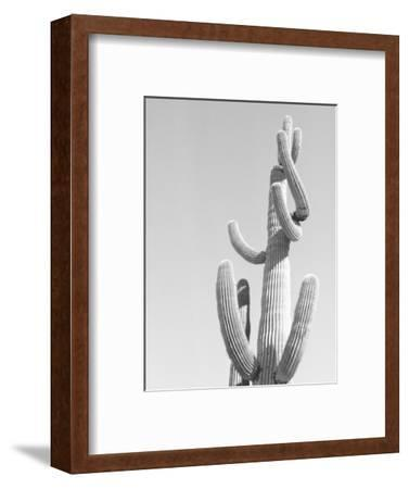 Black and White Image of a Cactus-Rob Lang-Framed Photographic Print
