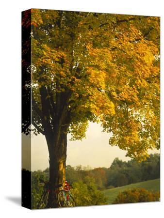 Road Bikes Leaning Against Maple Tree-Robert Houser-Stretched Canvas Print