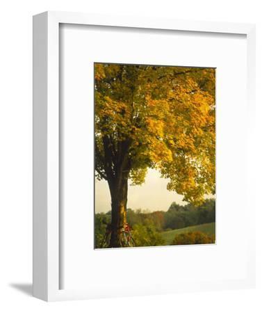 Road Bikes Leaning Against Maple Tree-Robert Houser-Framed Photographic Print