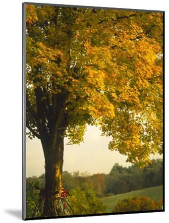 Road Bikes Leaning Against Maple Tree-Robert Houser-Mounted Photographic Print